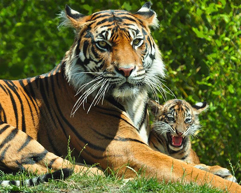 A mothers love 4 alyssa lynn 5